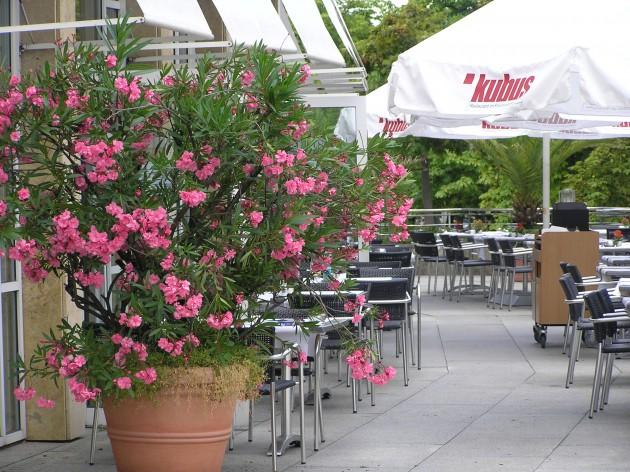 Restaurant Kubus: Kubus - die Sonnenterrasse